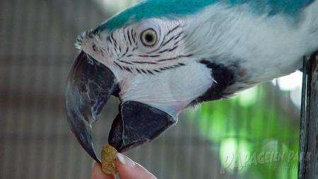Richtiges Futter für papageien - der Papageienpark Bochum hilft Ihnen