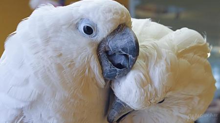 Papageienpark Bochum rät: doppelt hält besser: Tierliebhaber halten Papageien paarweise