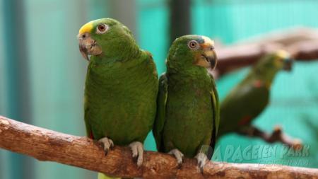 Gesunde Papageien im Papageienpark Bochum