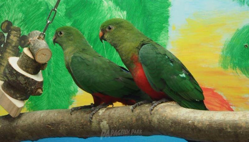 Arten aus unseren volieren papageienpark parrot park for Kleine teichfische arten