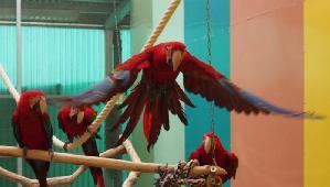Papageienpark CLUB Fotostrecke fliegender Aras