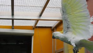 Papageienpark CLUB Fotostrecke fliegender Kakadus