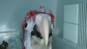 Arababy des Papageienpark