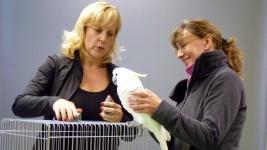 Papageien Verkauf