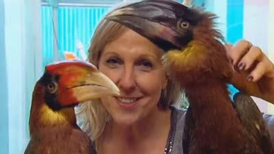 Hornvögel im Papageienpark