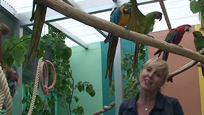 Papageien-Artenportraits-Aras-mit-Heike-Mundt