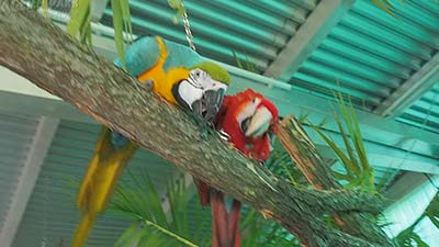 Papageienpark Café erleben