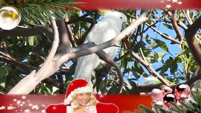 Weihnachtsgruß von Heike Mundt