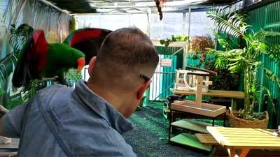 Papageien Praxistraining 2018 4