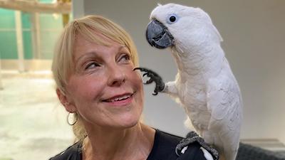 Grooming bei Papageien