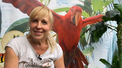 Infos zum Kauf und zu Preisen von Papageienbabys