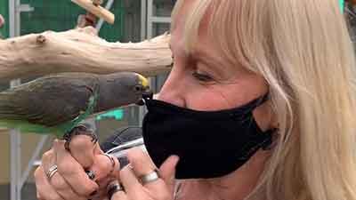 Kleine Papageienarten im Papageien Café