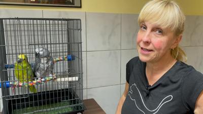 Flutopfer Papageien beim Tierarzt