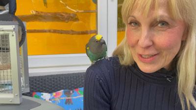 Verreisen mit dem Papagei