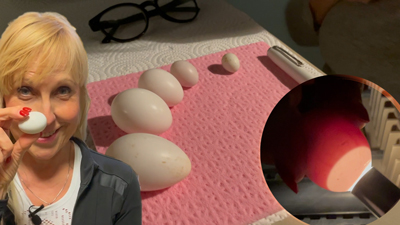 Frühlingszeit - Eierzeit