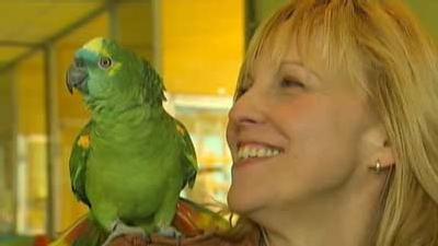 Intelligente Papageien und neues von Papagei Jacko