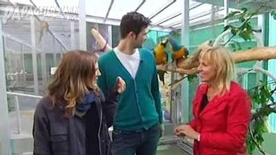 Intelligenz bei Papageien - xenius Beitrag 2013