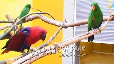 Edelpapageien im Papageienpark