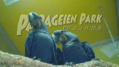 Hyacintharas im Papageienpark