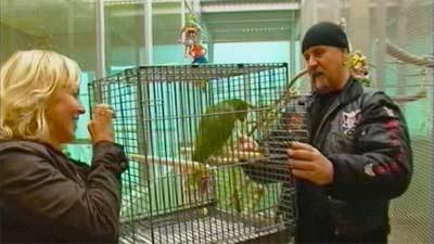 Papageienanpaarung im Papageienpark in WDR