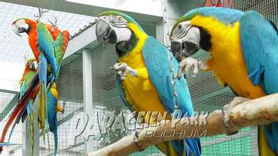 Aras im Papageienpark
