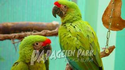 Soldatenaras im Papageienpark