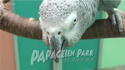 Graupapageien im Papageienpark